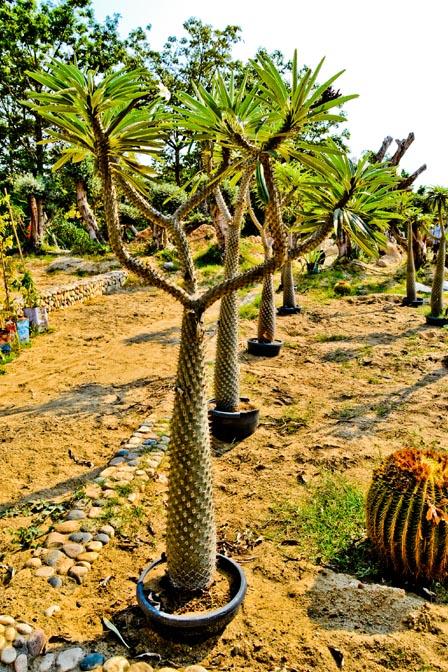 cactus_003