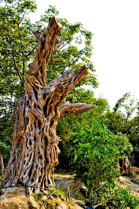 tree_0794