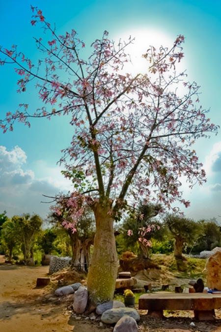 tree_0796