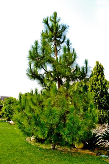 tree_0857