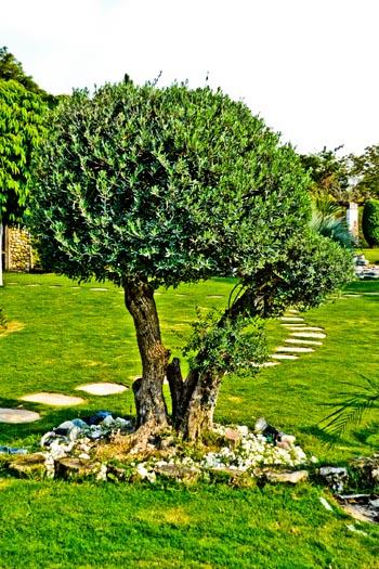 tree_0890