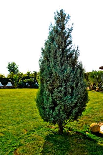 tree_0895