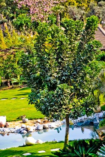 tree_0914