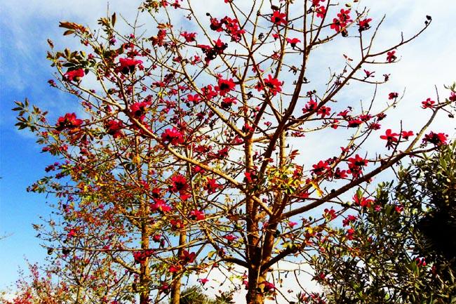 tree_0915