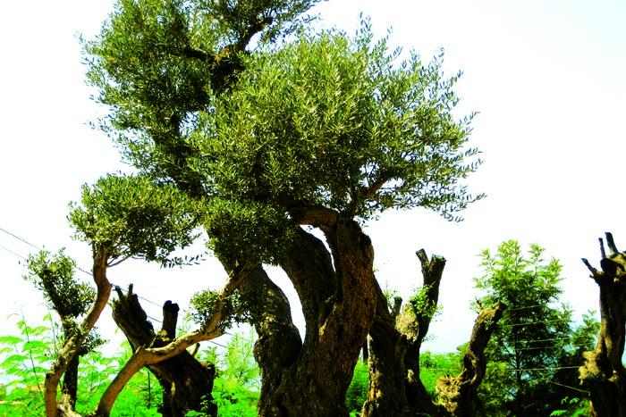 tree_0916
